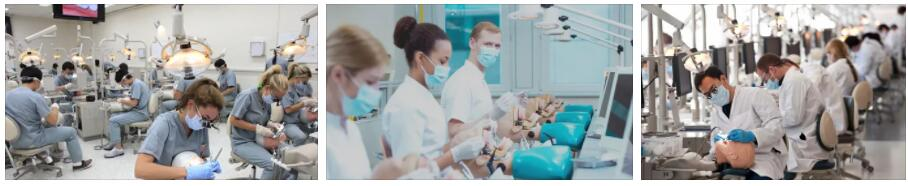 Cost for Studying Dentistry in the Czech Republic